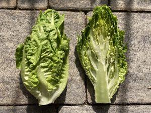 SalatHerz